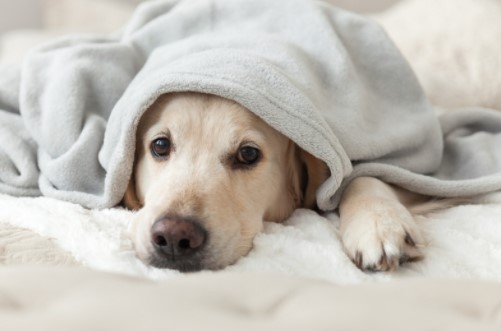 Caring for pets