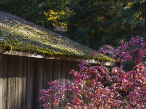 Are You Still Stuck On Should I Remove Moss From My Roof Read This