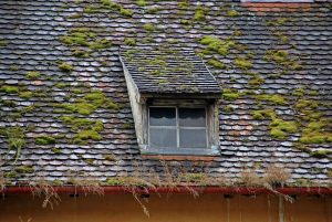 Three Reasons To Consider Roof Moss Removal & Cleaning For Your Home